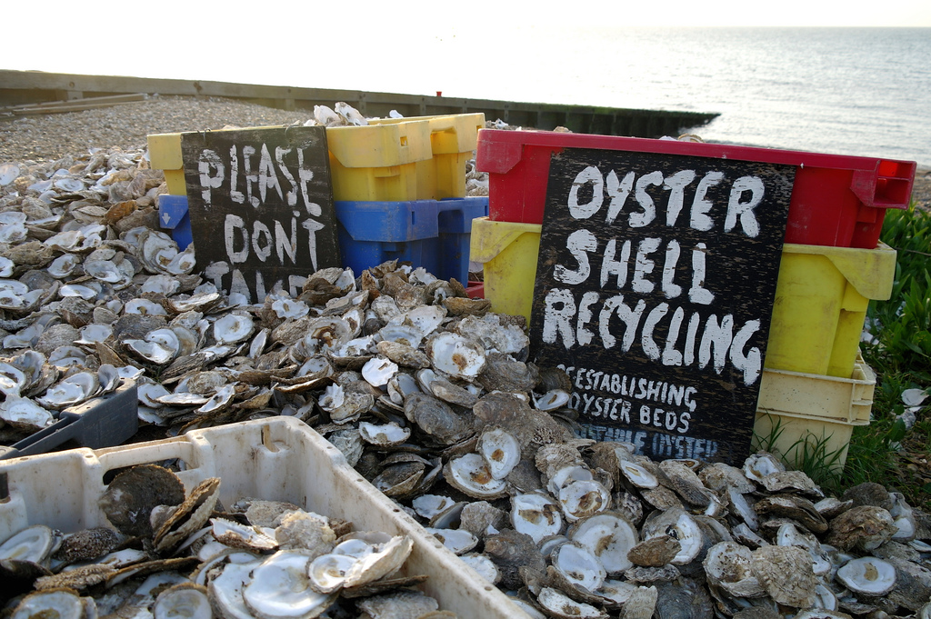 Oyster Shell Grit Oyster Shell Recycling
