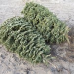 Christmas tree recycling makes for an ever-green holiday
