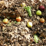 An update on composting in the big apple